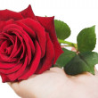 Give a rose - Foto Stock