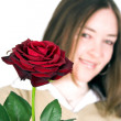 Lady and rose - focus on rose — Stock Photo