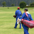 Stock Photo: Caddies