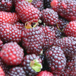 Berries — Stockfoto #7634858