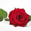 Stock Photo: Beautiful rose over white