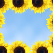Stock Photo: Sunflower frame