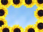 Sunflower frame — Stock Photo