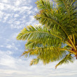 Palmtree and sky — Stock Photo