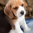 Little puppy — Stock Photo #7707240