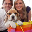 Puppy as gift — Stock Photo #7707281