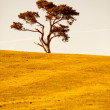 Royalty-Free Stock Photo: Lonely tree
