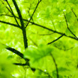 Picture of leaves - Stockfoto