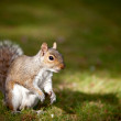 Stock Photo: Little squirrel