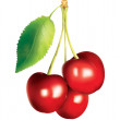 Bunch of cherries — Stock Photo #7708730