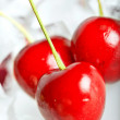Stock Photo: Frozen cherries