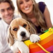 Puppy as a gift — Stock Photo