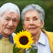 Elderly couple with a sunflower — Stock Photo