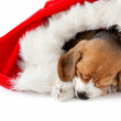 Puppy as a christmas gift — Stock Photo