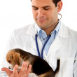 Veterinarian with a puppy — Stock Photo