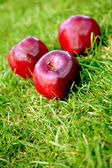 Appels over gras — Stockfoto