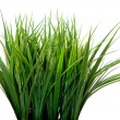 Stock Photo: Green plants