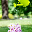 Watering can — Stock Photo #7741621