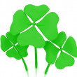Green clovers isolated — Stock Photo