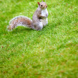 Stock Photo: Little squirrel outdoors