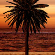 Beautiful palm tree at the beach — Stock Photo