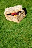 Picnic basket outdoors — Stock Photo