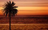 Beach palm tree at sunset — Stock Photo