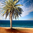 Beautiful beach view with palm tree - Stok fotoğraf