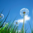 Grass and flowers with a blue sky - Stock Photo