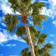 Palm trees on a blue sky — Stock Photo