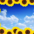 Stock Photo: Beautiful sunflower frame