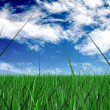 Grass and a blue sky - Stock Photo