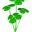 Green clovers — Stock Photo