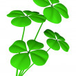 Stock Photo: Lucky clovers