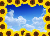 Beautiful sunflower frame — Stock Photo