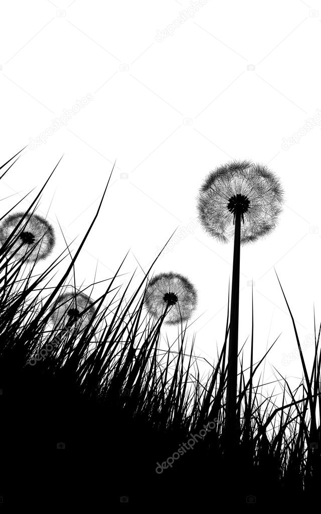 Black and white illustration silhouette of grass and dandelions flowers — ストック写真 #7755063