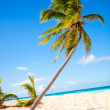 Palm tree at the beach — Stock Photo #7764232