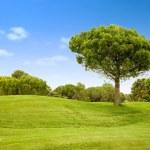 Beautiful outdoor landscape — Stock Photo