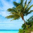 Palm tree in a tropical beach — Stock Photo #7768661