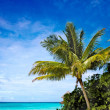 Palm tree in a tropical beach - Stock Photo