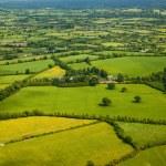 Field landscape — Stock Photo #7769958