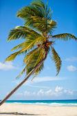Paradise — Stock Photo