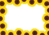Beautiful sunflower frame over white — Stock Photo