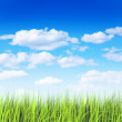 Grass and sky — Stock Photo