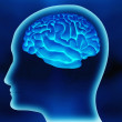 The human brain — Stockfoto #7771804