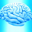 The human brain - Stock Photo