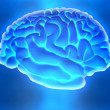 The human brain — Stockfoto
