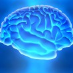 das menschliche Gehirn — Stockfoto