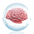 3D Brain in a crystal ball - Stock Photo