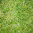 Grass texture background — Stockfoto